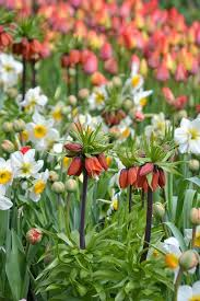 free photo spring sea of flowers flowers free image on