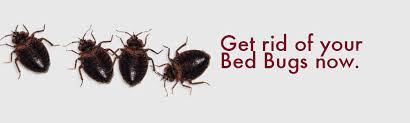 Bed Bug Com Bed Bug Exterminator Ny Dial A Bug Pest Control