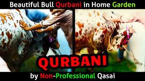 beautiful garden movie beautiful bull qurbani in home garden by non professional qasai in