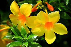yellow flowers wallpapers yellow flowers free