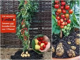 gem se pflanzen balkon balkongarten ideen gemüse auf dem balkon anbauen eat smarter