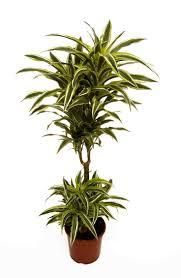 23 best 花藝 images on pinterest plants indoor plants and gardening