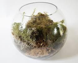 big moss terrarium kit u2013 geodesium terrariums