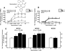 neurounina 1 a novel compound that increases na ca2 exchanger