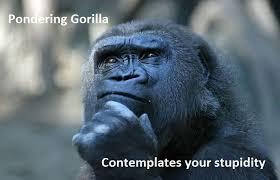 Funny Gorilla Meme - pondering d69b67 2533526 jpg