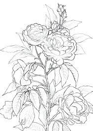 imagenes para colorear rosas flor rosa para colorear son flores rosas para pintar efil info