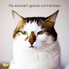 imagenes de gatitos sin frases frases de gatos