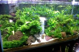 Aquascape Design Design Aquascape Design Aquascape