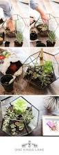 Succulent Kits by 188 Best Succlents Images On Pinterest Flowers Plants And