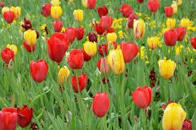 flowering gardens picture of dallas arboretum u0026 botanical