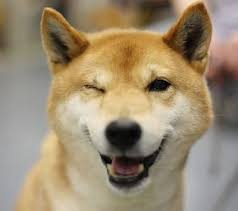 Wink Face Meme - this reminds me of my nikki dog i miss her and her happy face