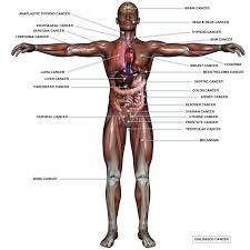 man every parts name all parts of the human body man all body