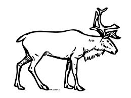 coloring reindeer