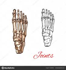 vector sketch icon of human foot bones or joints u2014 stock vector