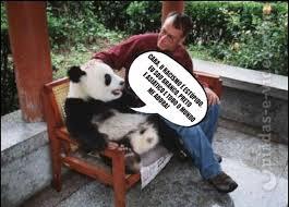 Memes De Pandas - piadas e videos piadas e vídeos em memes racismo explicado pelo