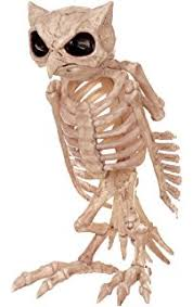 Halloween Decoration Skeleton Cat by Amazon Com Spooktacular Creations Skeleton Cat U0026 Rat Skeleton For