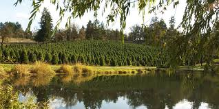 Fraser Christmas Tree Permit by Where To Buy Local Christmas Tree Farms