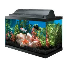 aquarium starter kit fish tank kit aqueon aquarium products