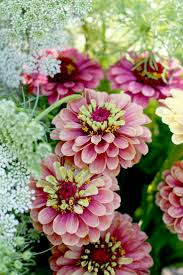 top 10 gorgeous flowers to use for garden beds top inspired