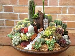best 25 tiny cactus ideas on pinterest mini cactus garden mini