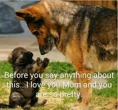 Funny German Shepherd Memes - 23 totally relatable german shepherd memes rover com