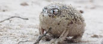 watch there u0027s nothing cuter than this little frog u0027s u0027roar u0027 azula