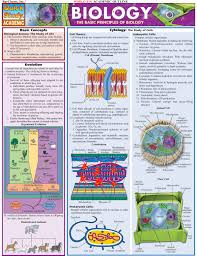the basic principles of biology infographic design biology