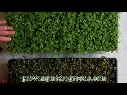 youtube garden tips pinterest gardens indoor gardening and