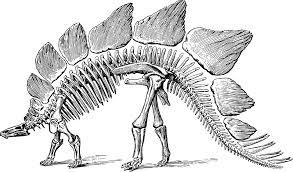 free vector graphic dinosaur fossil paleontology free image