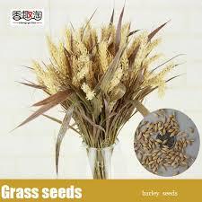 ornamental grass seeds barley garden flower seeds organic seeds