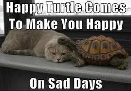 Sad Kitty Meme - when kitty is sad send in happy turtle meme guy