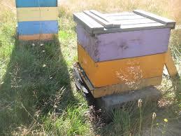 brookfield farm bees and honey blog brookfield farm bees u0026 honey