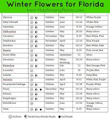 12 Best Annual Flowers For by 28 Best Winter Annuals For Florida Images On Pinterest Florida