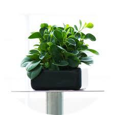 Indoor Planter Pots by Modern Plant Pots U2014 Fiberglass U0026 Cement Planters Tau Manufacturing