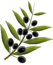 olives fruits olive tree free vector graphic on pixabay