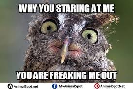 Funny Owl Meme - owl memes