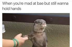 Memes Animals - 22 animal memes that will make you laugh harder than they probably