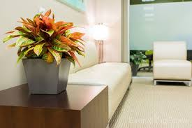 office plant home office indoor flowering office plant modern new 2017 design
