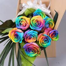 multi colored roses 150pcs beautiful rainbow colored seeds multi