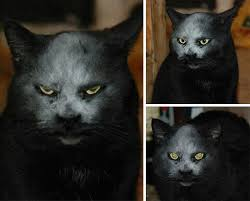 Evil Cat Meme - 10 pics proving that cats are actually demons bored panda