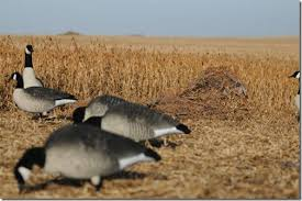 Goose Layout Blind Your Store Killerweed Layout Blind Kit By Avery Outdoors