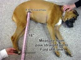 boxer dog feet dog wheelchair measuring dog wheelchairs dog carts handicapped