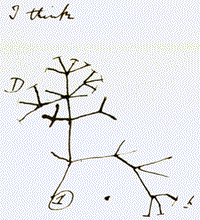 28 darwins tree of life sketch viewing gallery theory of