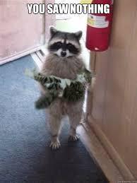 Evil Raccoon Meme - evil raccoon meme excellent 2018 images pictures yes i am most