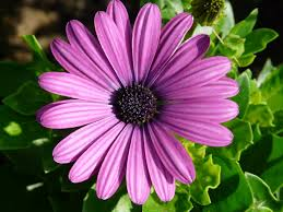 purple flower free images blossom flower purple petal summer botany pink
