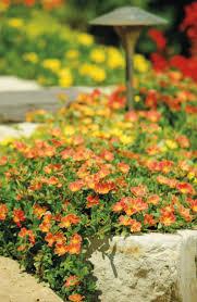 218 best garden succulents images on pinterest plants