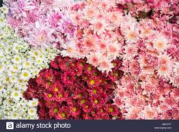 Wholesale Flowers Colorful Flowers Background For Sale At The Wholesale Flower