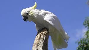 birds skies king bird hd live wallpaper for hd 16 9 high
