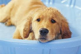 Make Bathtime Fun For Your Dog How To Bathe And Groom Your Puppy