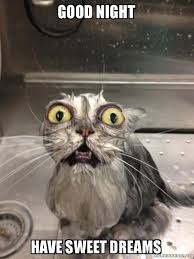 Good Cat Meme - good night have sweet dreams cat bath make a meme
